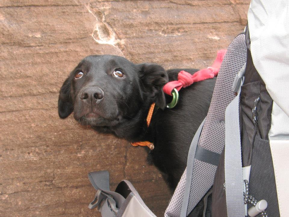 This is my dog's reaction when I take a 25ft whipper, and stop a foot above the ground. So scary.